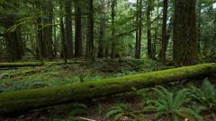 Free Forest Moss Wallpaper 34388