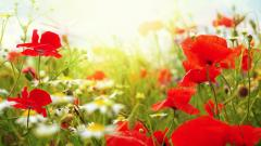 Free Garden Wallpaper 26318