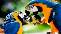 Free Macaw Wallpaper 35868
