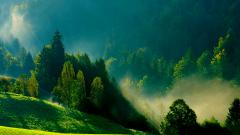 Free Mist Wallpaper 27408