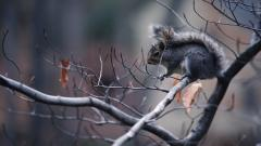 Free Squirrel Wallpaper 34480