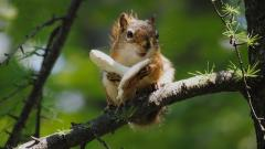 Free Squirrel Wallpaper 34499