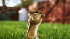 Funny Squirrel Wallpaper 34502