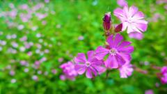 Garden Background 26321
