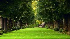 Garden Pictures 26312