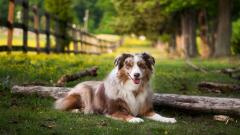 Gorgeous Dog Nature Wallpaper 44754