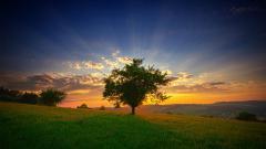Gorgeous Grasslands 39649
