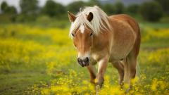 Gorgeous Horse Wallpaper 39953