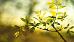 Gorgeous Leaves Macro Wallpaper 39023