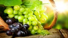 Grapes Wallpaper 20458