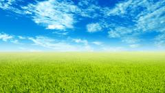 Grass Wallpaper 13866