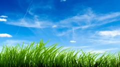 Grass Wallpaper 13872