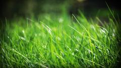 Grass Wallpaper 13873