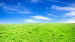 Grass Wallpaper 13874