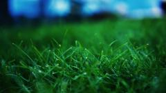 Grass Wallpaper 13876