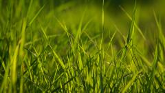 Grass Wallpaper 13878
