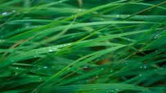 Grass Wallpaper 13881