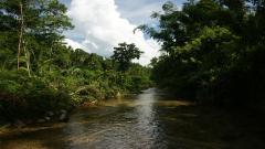 Jungle Wallpaper 4336