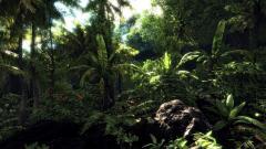 Jungle Wallpaper 4340