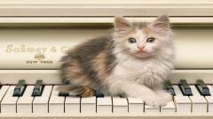 Kitten 24264
