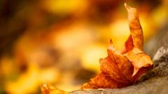 Leaf Macro Wallpaper 39014