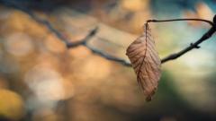 Leaf Macro Wallpaper HD 39005