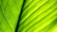 Leaf Macro Wallpapers 39006