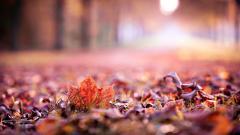 Leaves Macro 39021