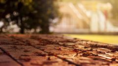 Leaves Macro Wallpaper 39022