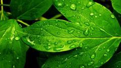 Lime Green Wallpaper 21081