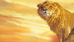 Lions Wallpaper 5316
