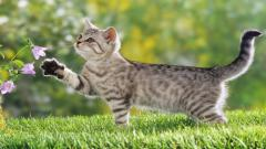 Lovely Cat Wallpaper 24260