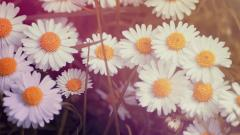 Lovely Daisy Bokeh Wallpaper 39249