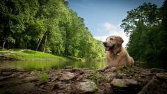 Lovely Dog Nature Wallpaper 44749