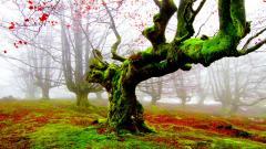 Lovely Forest Moss Wallpaper 34403