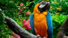 Macaw Background 35871
