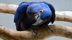 Macaw Pictures 35864