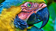 Macaw Wallpaper 35854