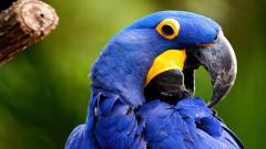 Macaw Wallpaper 35856