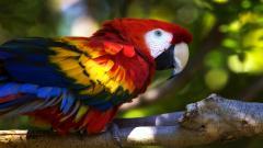 Macaw Wallpaper 35861