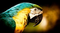 Macaw Wallpapers 35859