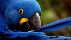 Macaw Wallpapers 35869