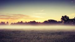 Mist Pictures 27418