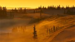 Mist Wallpaper 27400