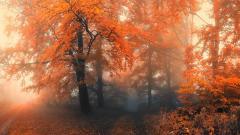 Mist Wallpaper 27402