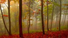 Mist Wallpapers 27423