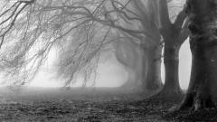 Morning Mist 27419