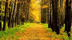 Path 29634