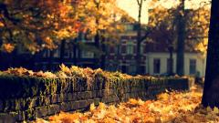 Pretty Fall Wallpaper 42069