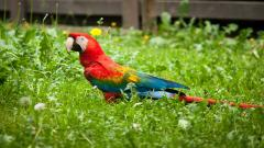 Pretty Macaw Wallpaper 35876